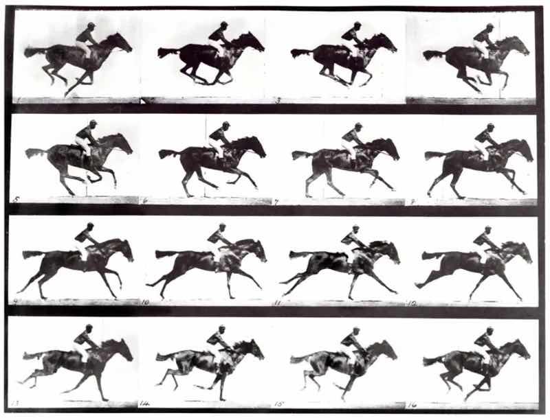 馬が空を飛んでいることがわかる写真